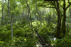 Mountain forest path stock images