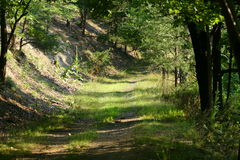 Mountain Forest Path or Trail Royalty Free Stock Images