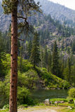 Mountain Forest and River Landscape. Pacific Northwest mountain landscape with pine forest cover and river in Cascade Mountains of Washington State.  One Royalty Free Stock Photography