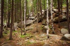 Mountain forest Stock Photos