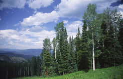 Mountain forest in Rocky Mountains Royalty Free Stock Photography