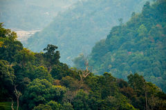 Mountain forest sly lanscape. Under moring sunlight on forest Royalty Free Stock Photography