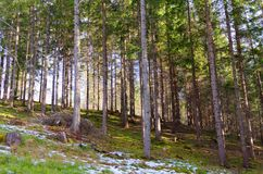 Mountain forest in spring Stock Photos