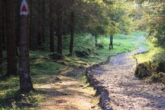 Mountain forest stone path marked route at sunset Stock Photo