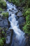 Mountain forest stream. Mountain forest cold clear stream Stock Photo