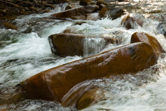 Mountain forest stream Royalty Free Stock Photo