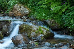 Mountain forest stream Stock Images