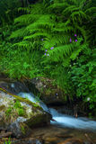 Mountain forest stream Royalty Free Stock Image