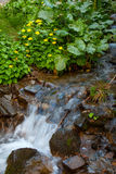 Mountain forest stream Royalty Free Stock Photography