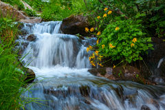 Mountain forest stream Stock Image