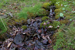 Mountain forest stream among grass and moss Royalty Free Stock Image