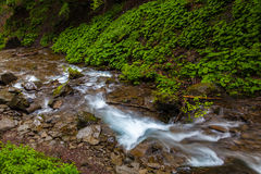 Mountain forest stream after rain Royalty Free Stock Photos
