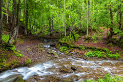 Mountain forest stream and wooden bridge after the rain Royalty Free Stock Photo