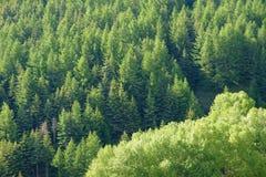 Mountain forest Stock Photo