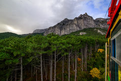Mountain forest on top of a mountain in Crimea. Royalty Free Stock Image