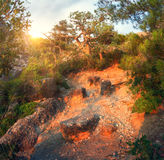 Mountain forest with trail at sunrise. Panoramic landscape royalty free stock image