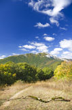 Mountain forest under blue sky. Royalty Free Stock Photos