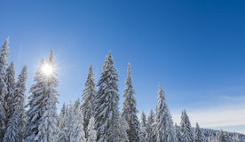 Mountain forest under the snow in winter Stock Photo