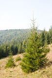 Mountain forest Stock Image