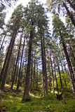 Mountain forest Royalty Free Stock Images