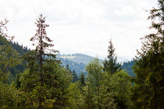 Mountain forest stock images