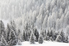 Mountain forest in winter Royalty Free Stock Photo