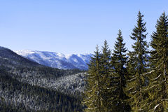 Mountain forest Royalty Free Stock Photos