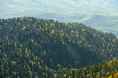 Mountain forrest, autumn Royalty Free Stock Photography