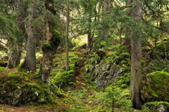 Mountain Forrest at the sea of Kings in Berchtesgaden Royalty Free Stock Photo