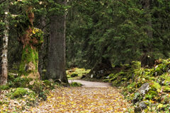 Mountain Forrest at the sea of Kings in Berchtesgaden Stock Images
