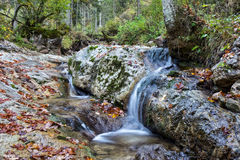 Mountain Forrest at the sea of Kings in Berchtesgaden Royalty Free Stock Photos