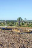 Mountain Fox on El Palmar National Park, Argentina Royalty Free Stock Photos