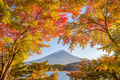 Mountain Fuji. Autumn tree and Mountain Fuji at lake kawaguchiko in autumn season Royalty Free Stock Photography