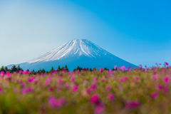 Mountain Fuji with Blurry foreground of pink moss sakura or cher. Ry blossom field in Japan Shibazakura Festival background Royalty Free Stock Photos