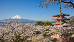 Mountain Fuji and Chureito red pagoda with cherry blossom sakura royalty free stock images