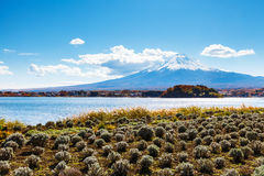 Mountain fuji with lake kawaguchi. In japan royalty free stock photography