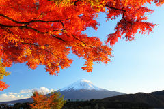 Mountain Fuji and maple tree Stock Images
