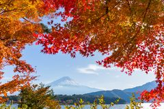 Mountain Fuji with maple tree Royalty Free Stock Images