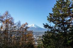 Mountain Fuji in the morning with tree in front Stock Photography