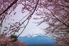 Mountain Fuji in spring ,Cherry blossom Sakura Stock Photos