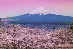 Mountain Fuji in spring ,Cherry blossom Sakura Stock Photo