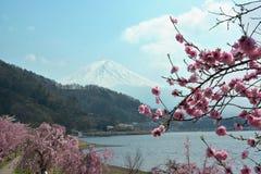 Mountain Fuji and sakura stock images