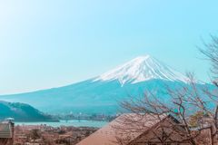 Mountain Fuji in winter framed by dry fall tree. In blue color stock image