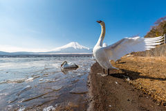 Mountain Fuji Yamanaka and Goose Stock Photography