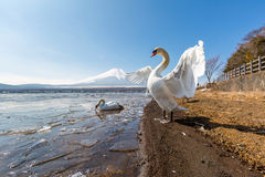 Mountain Fuji Yamanaka and Goose Stock Image