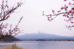 Mountain Fujiyama, a remarkable land mark of Japan in a cloudy day with cherry blossom or Sakura in the frame. The picture of Spri Stock Photo