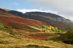 Mountain full of red ferns, and green pastures Royalty Free Stock Photography