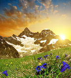 Mountain Gabelhorn at sunset. In the foreground gentian, Switzerland royalty free stock images
