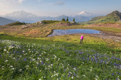 Mountain Gazing. Sarah gazes out at the sunrise along the Yellow Aster Butte trail looking towards Mt. Baker, Washington State, USA Royalty Free Stock Photo