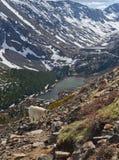 Mountain goat in Colorado Stock Image